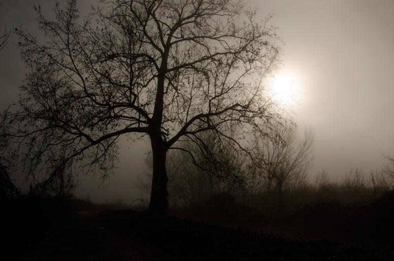 nebbia sul padule