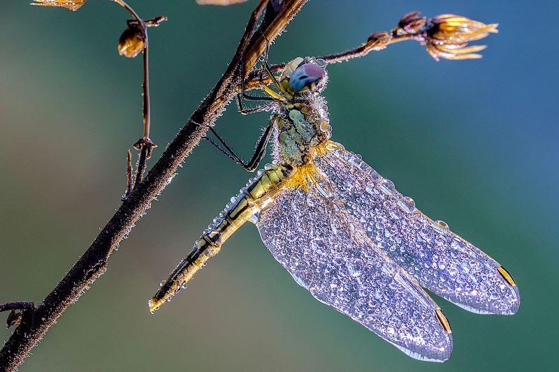 ali di cristallo