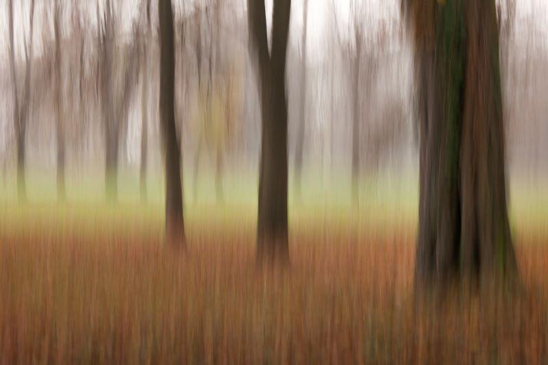 alberi in veste autunnale