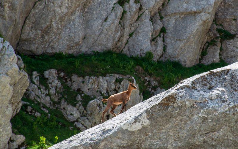 Solitario tra le rocce