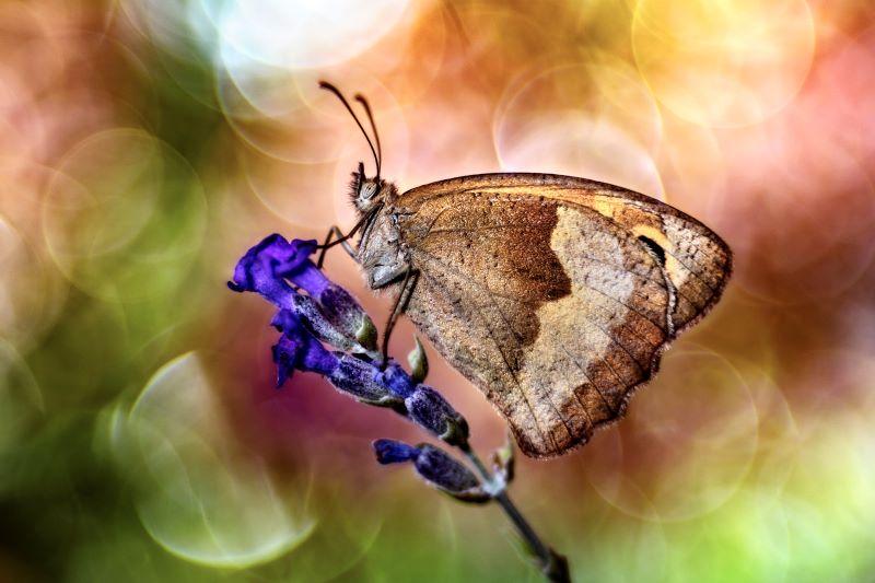 Il colore della natura