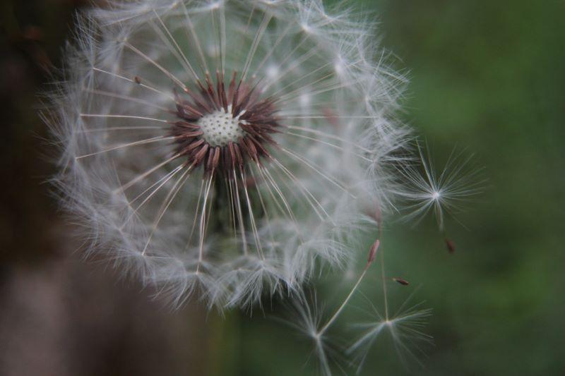 Un soffio di vento