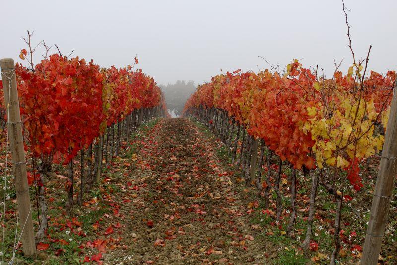 Filari d'autunno