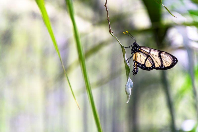 Leggerezza della farfalla
